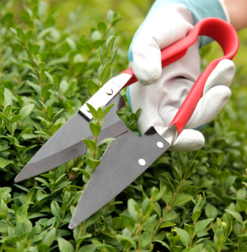 Spear & Jackson Razorsharp Topiary Shears