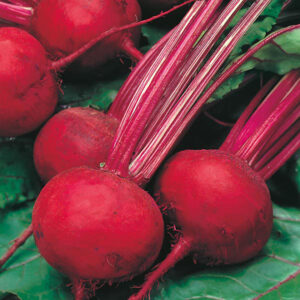 Beetroot Boltardy Bumper Seed Pack